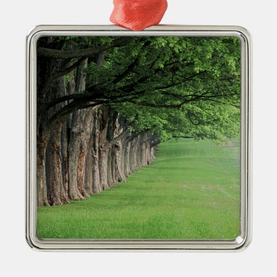 Stately row of trees, Louisville, Kentucky. Metal Ornament