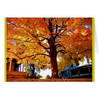 Stately Tree Autumn Tree Colors Card