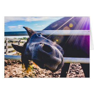 Stationary, Greeting Cards, Blank Notes, Horse Card