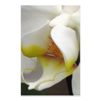Stationery - Orchid