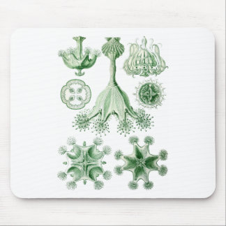 Stauromedusae Mouse Pads