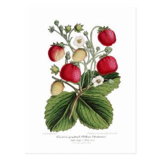 Stawberry Tarjetas Postales