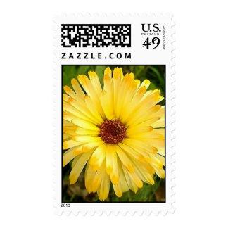 Stawflower en amarillo envio