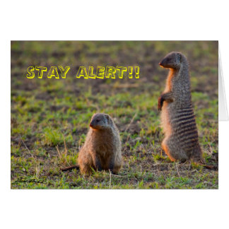 Stay Alert! Greeting Card
