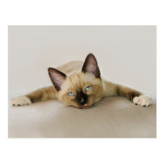 Stay cool and chill out kitten postcard