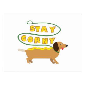Stay Corny Postcard