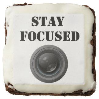 stay focused brownie