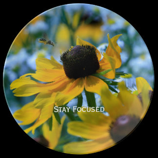 Stay Focused Daisies Custom Plate