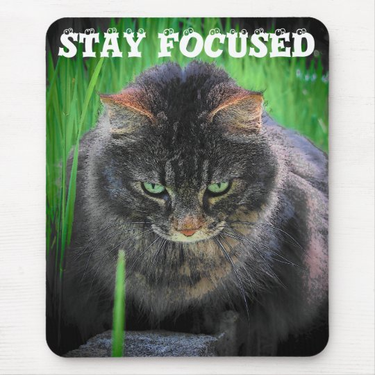 Stay Focused Kitty Mouse Pad