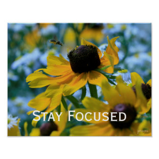 Stay Focused Quote Daisies Custom 14x11 Poster
