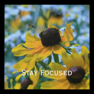 Stay Focused Quote Daisies Panel Wall Art
