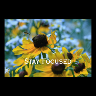 Stay Focused Quote Daisies Photo Print