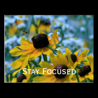 Stay Focused Quote Daisies Postcard