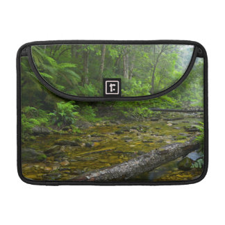 Steam In Forest, The Knysna-Amatole Montane Sleeve For MacBooks