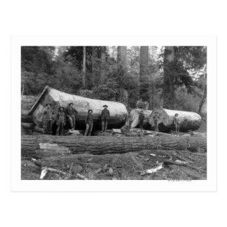 Steam Logging in the Cascades of Washington Stat Postcard
