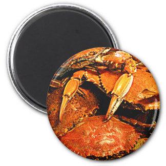 Steamed Maryland Hard Crabs Refrigerator Magnet
