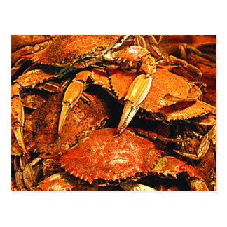 Steamed Maryland Hard Crabs Post Card