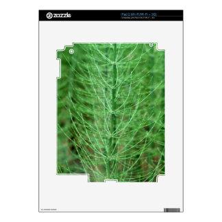 Steams of water horsetail (Equisetum fluviatile) iPad 2 Skin