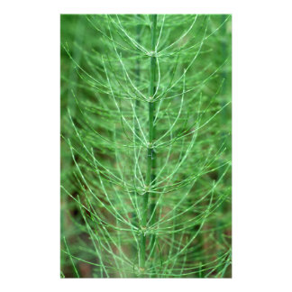 Steams of water horsetail (Equisetum fluviatile) Stationery