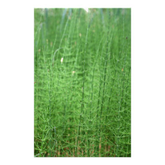 Steams of water horsetail stationery