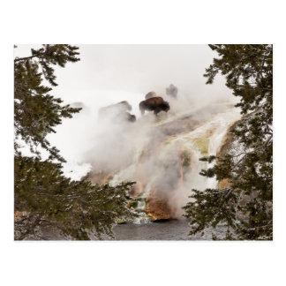 Steamy Bison Postcard