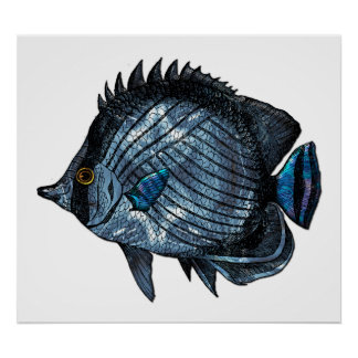 Steel Blue Tropical Butterfly Fish Print