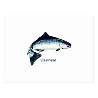 Steelhead Swimming Postcard