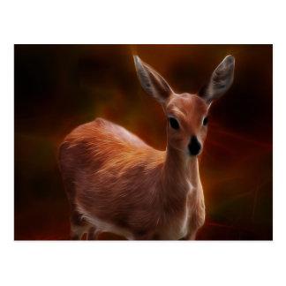 Steenbok deer are so tiny postcard