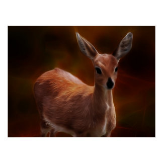Steenbok deer are so tiny poster