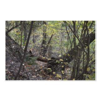 Steep Forest Hillside Photo