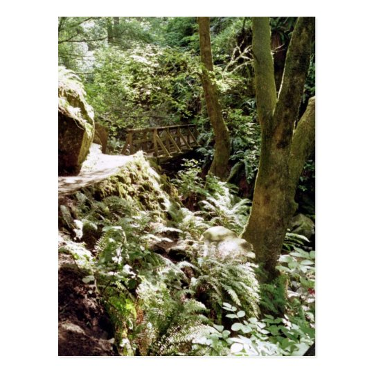 Steep Ravine trail Postcard