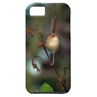 steeptakeoff beach wren iphone 5 case