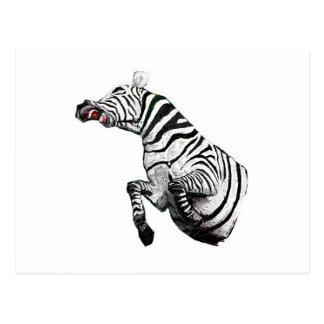 Steevn_zebra2 Postal
