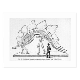 Stegosaurus skeleton art postcard