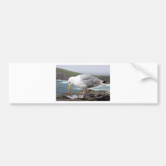 stehende Moewe Bumper Sticker