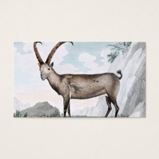 Steinbock (Ibex) Illustration Business Card