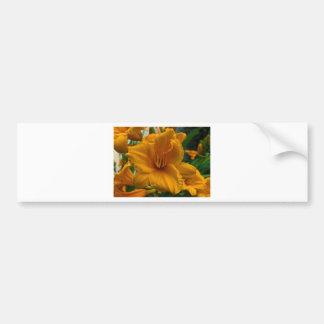 Stella de Oro Bumper Sticker