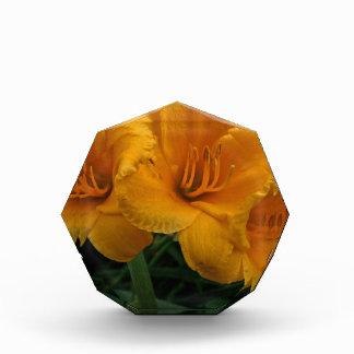 Stella de Oro III Acrylic Award