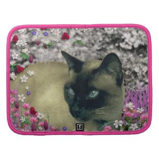 Stella en flores I - gato siamés poner crema del c Planificadores