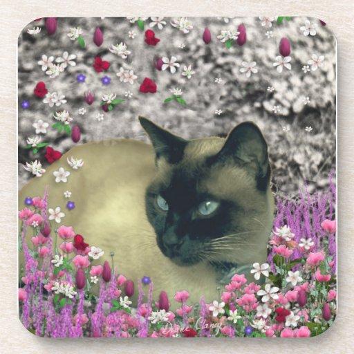 Stella en flores I - gato siamés poner crema del c Posavaso