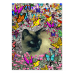 Stella in Butterflies Chocolate Point Siamese Cat Postcards