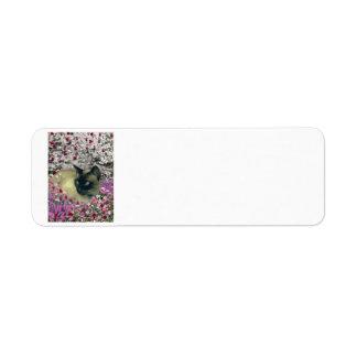 Stella in Flowers I – Chocolate Cream Siamese Cat Label