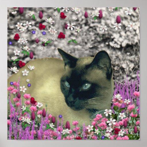 Stella in Flowers I – Chocolate Cream Siamese Cat Poster