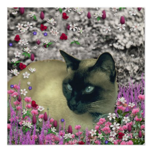 Stella in Flowers I, Chocolate & Cream Siamese Cat Perfect Poster