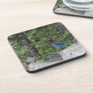 Stellar Blue Jay Beverage Coaster