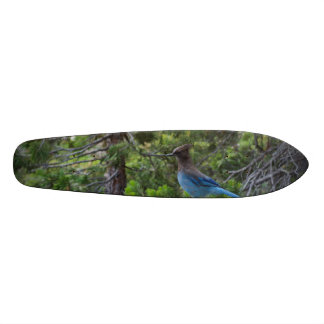 Stellar Blue Jay Skateboard Deck