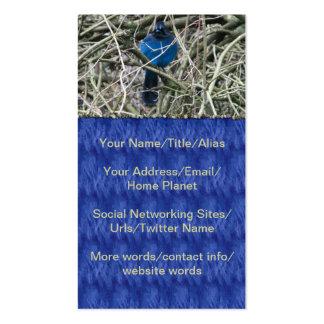 STELLAR JAY BUSINESS CARD
