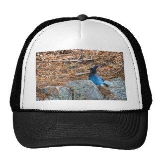 Stellar Jay Trucker Hat