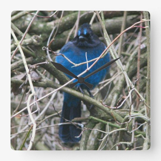 Stellar Jay Square Wall Clock