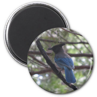 Stellar Jay- Yosemite 2 Inch Round Magnet